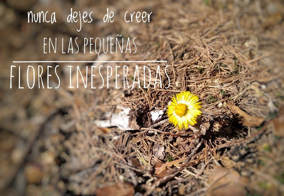 (Català) Flors inesperades