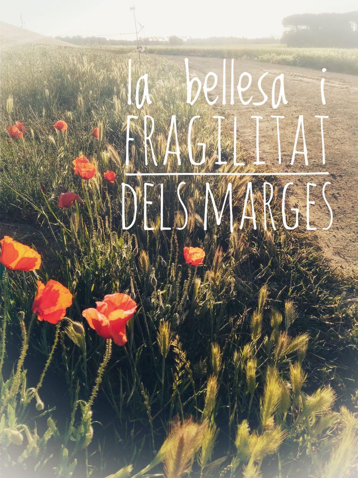 (Català) Bellesa i fragilitat